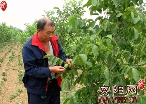 进一步加快农业产业结构调整